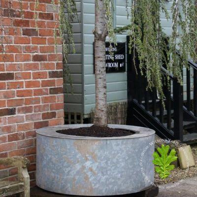 Huge Circular Galvanised Planters from London