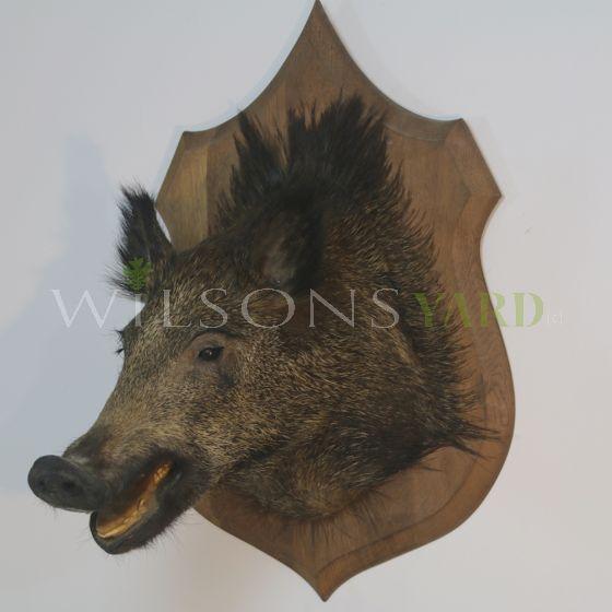 Vintage hunting trophy head