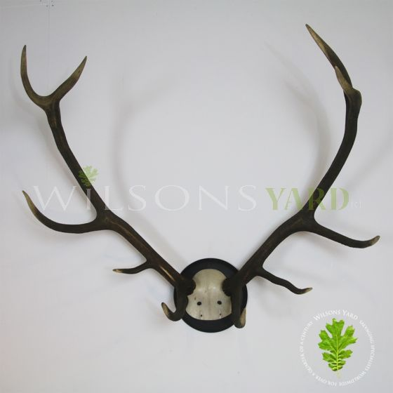 Antique Deer Antlers