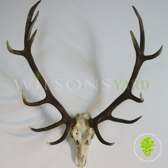 Vintage trophy Deer head