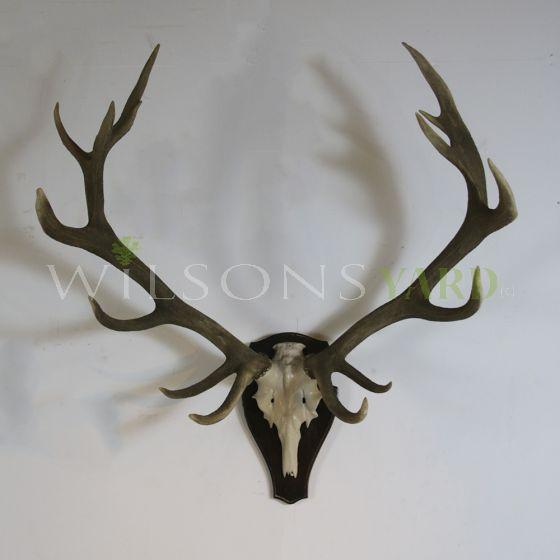 Vintage stags head